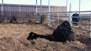 """Част от животните във фермата на """"Еко Агро"""". Фото: Велина Барова / Евромегдан"""