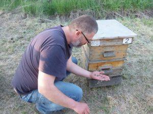 Йордан Йорданов от Шабла за пореден път намира измрели пчели пред кошерите си. Това, оказва се, е проблем, с който се сблъскват много пчелари. Фото: Велина Барова / Евромегдан